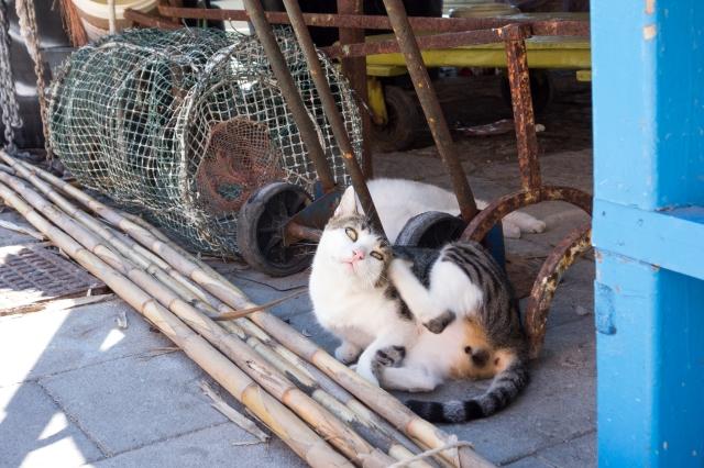 Chat se prélassant à Marina Corricella