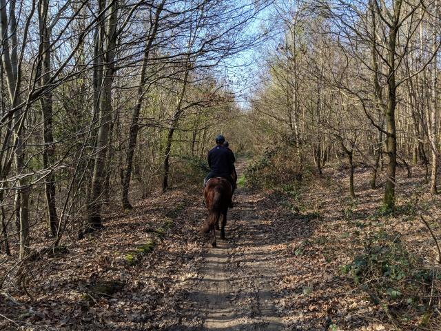 Randonnée à cheval en forêt de Lyons